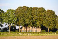 Landschaftsbild mit Bäumen und Schafen